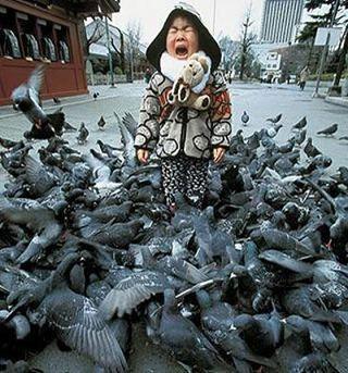 Pigeons_avec_une_petite_fille_larme